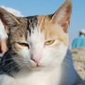 cat-66977_1280