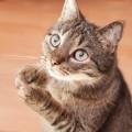 猫好きさんにピッタリのプレゼントカードを手作りしてみよう