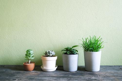 カラフルな鉢カバーの多肉植物
