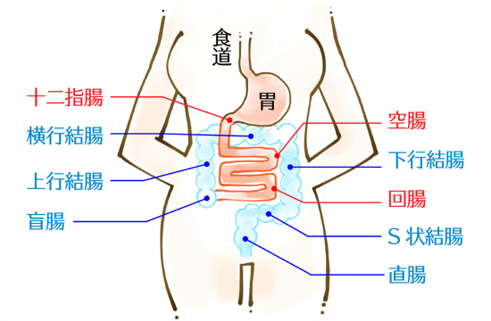 停滞腸になってしまう仕組み