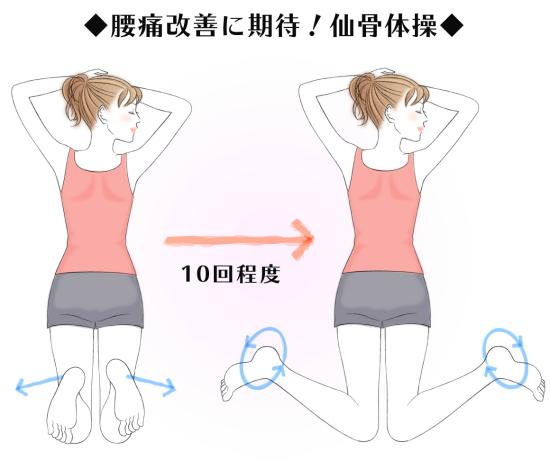 仙骨体操8705-1