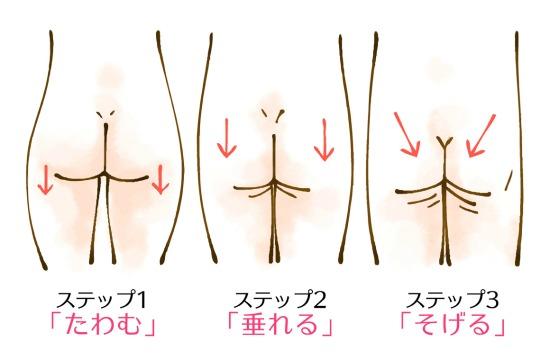 加齢によるお尻の形の変化の順序