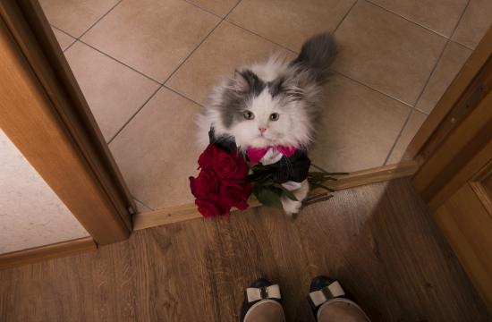 猫好き男子