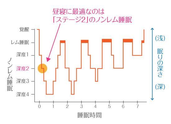 レム睡眠・ノンレム睡眠の段階を表すグラフ