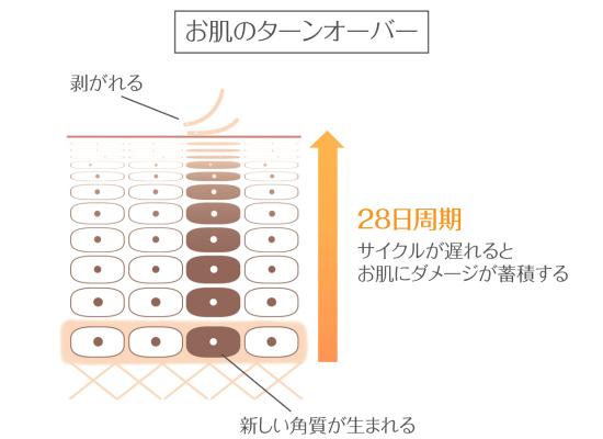 肌のターンオーバーの仕組みとサイクル