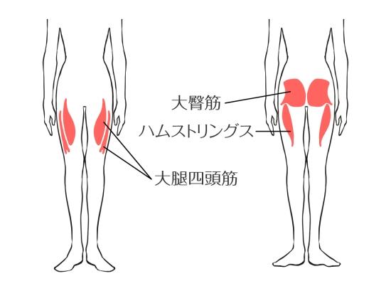 太股の筋肉1220-1