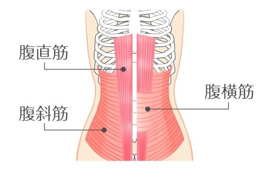 腹筋筋肉0502-1