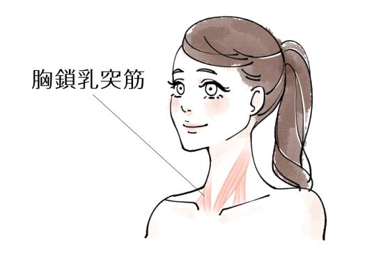 胸鎖乳突筋1214-1