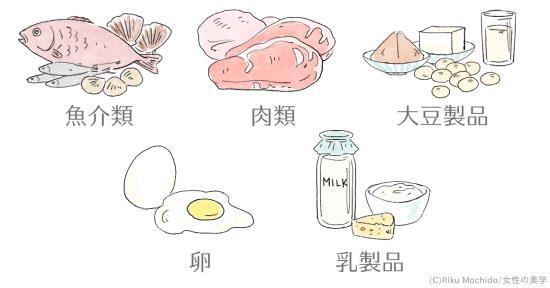 脂肪を燃やす筋肉を作る元、たんぱく質を食べよう