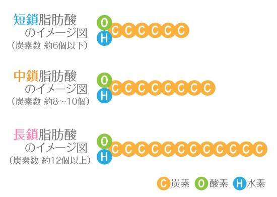 長鎖脂肪酸と短鎖脂肪酸029-2