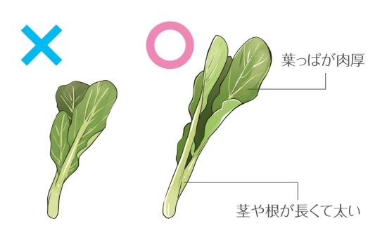 小松菜の選び方0622-2