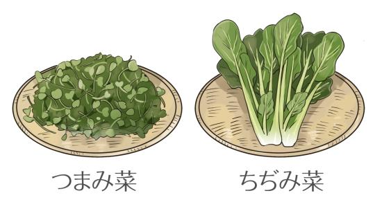 小松菜の種類0622-3