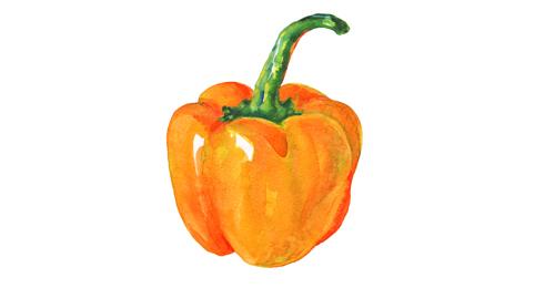 Pレンジパプリカのイラスト