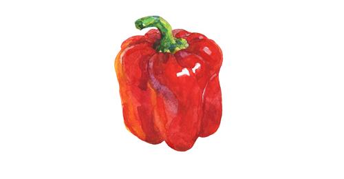 赤パプリカのイラスト