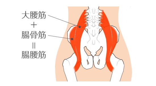 腸腰筋07256