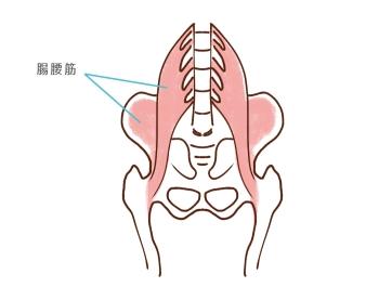 腸腰筋09112
