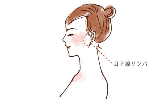 耳下腺リンパ 1165813