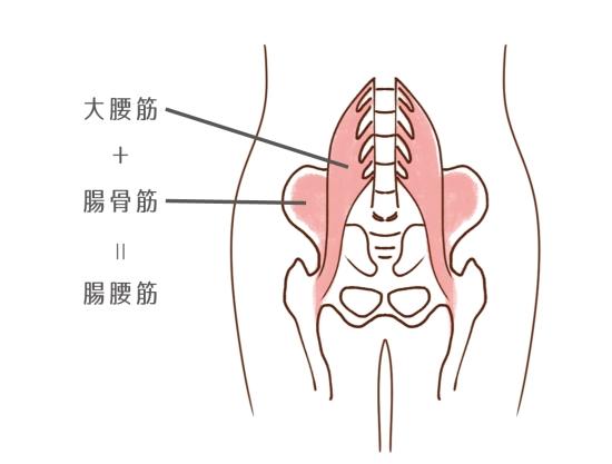 腸腰筋68512
