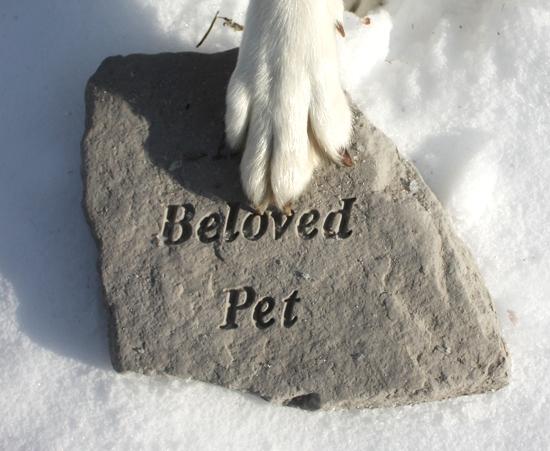 ペットを偲ぶメッセージの写真