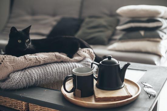 昼下がり、紅茶とネコの写真