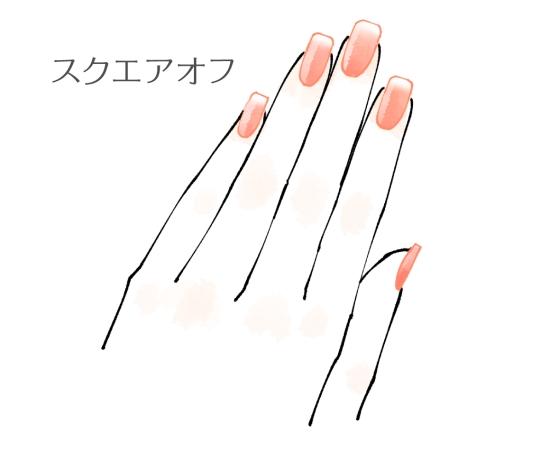 爪の形「スクエアオフ」のイラスト