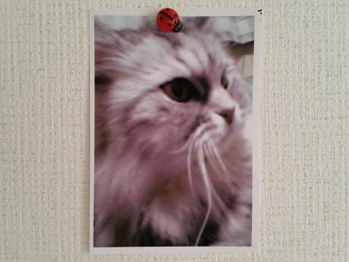 猫の写真の画像