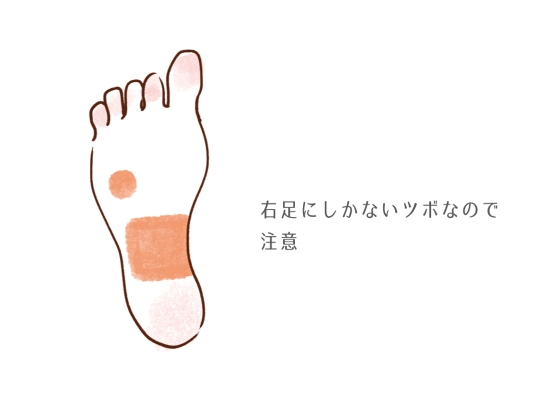 肝臓の反射区1104115