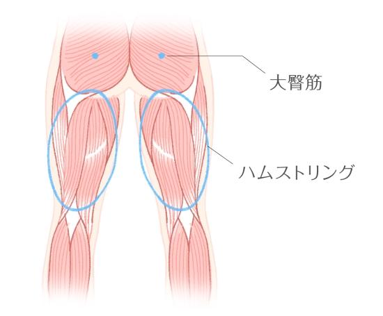 ヒップアップの筋肉95311