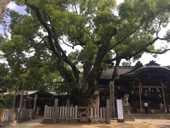石切劔箭神社の御神木