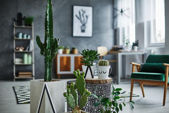 サボテンや多肉植物が飾ってある部屋の写真