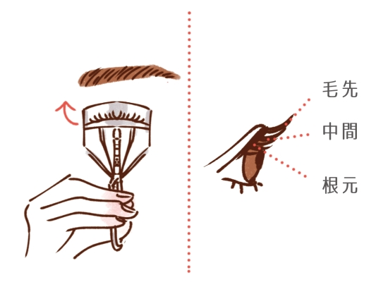 ビューラーを3段階で分けて上げる方法