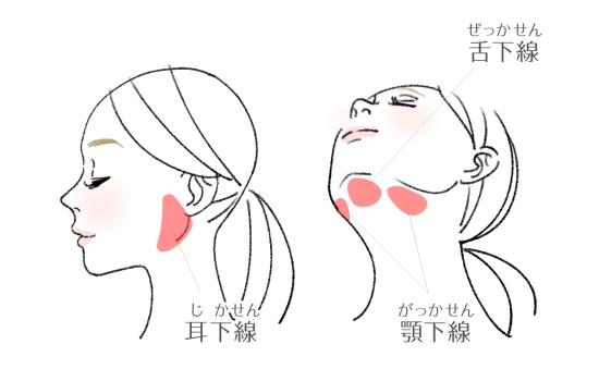 唾液腺のツボ耳下腺、顎下腺、舌下線の位置