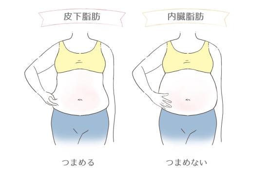 皮下脂肪と内臓脂肪の違い2