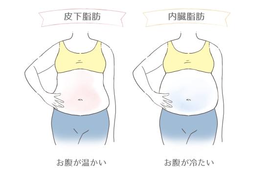 皮下脂肪と内臓脂肪の違い3