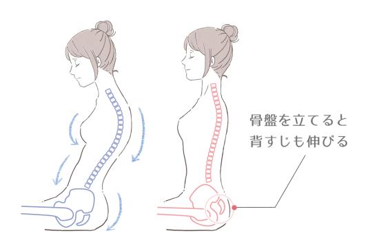 腰を丸めないで骨盤を立てるように意識するだけで、背すじもしっかりと伸びてきます。