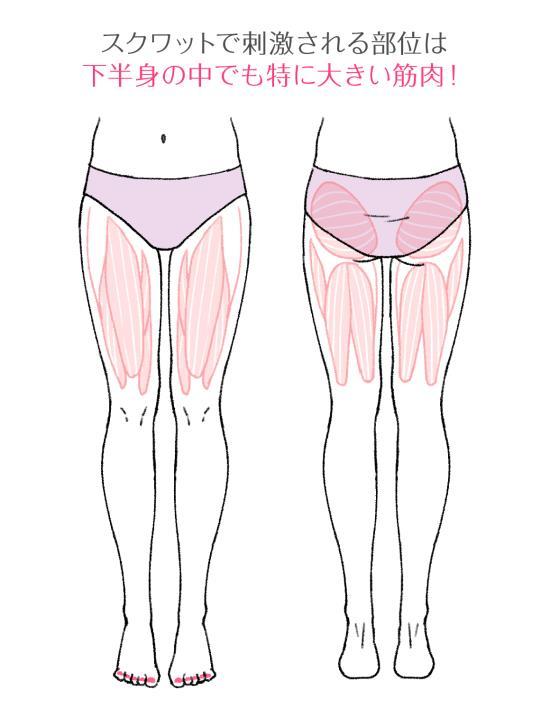 下半身の筋肉の部位