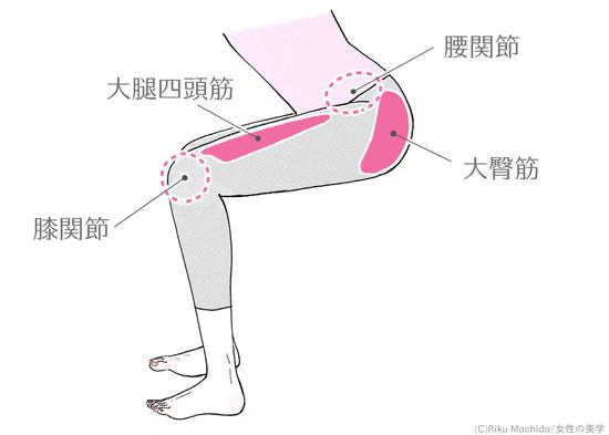 ハーフスクワットで鍛えられる筋肉の部位説明